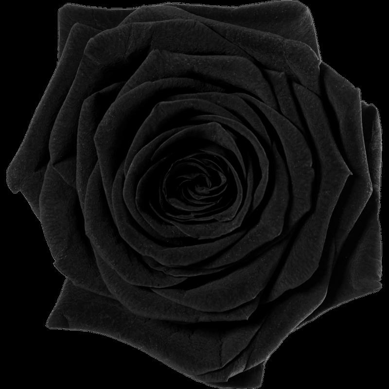 schwarz (BLA)