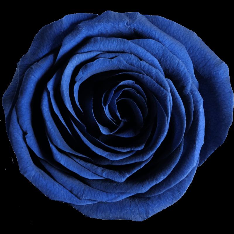 marineblau (RBL)