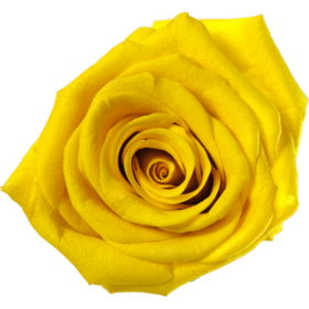 Sonniges Gelb (SYE)