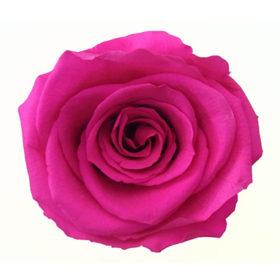 Rosa (P-1)