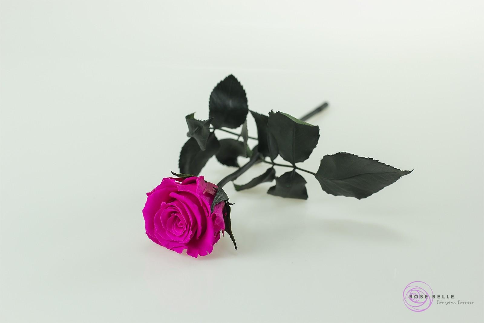 Rose Belle - róża krótka w kolorze różowym.